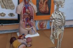 Oprema kabineta za anatomiju